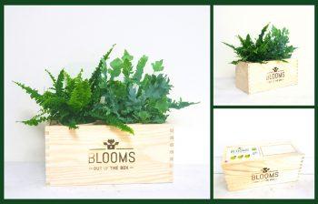 Kruger Geschenken Luchtzuiverende Planten